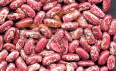 Light Red Kidney Bean (Rajma)- (Shrinath) - 2 LB