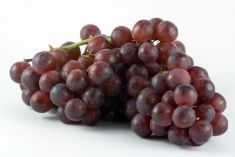 Grape Red - 1 LB