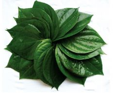 Paan Leaf - 4 Piece